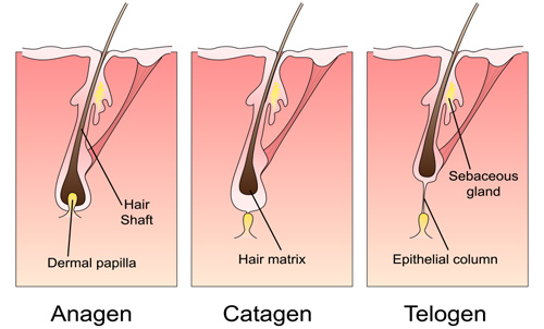 The different stages of hair growth affect laser hair removal